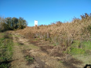 Zona cercana al rio Duero de la Fuente Buena