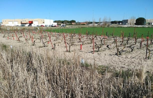 Zonas de viñedos cercanas al Polígono de las Lobas
