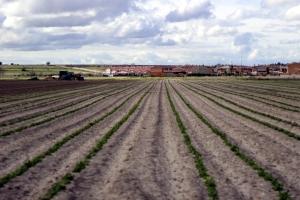 Tierras de cultivo en Laguna de Duero