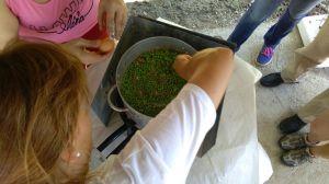 Fiesta del Guisante en Huertos Ecológicos El Maniego