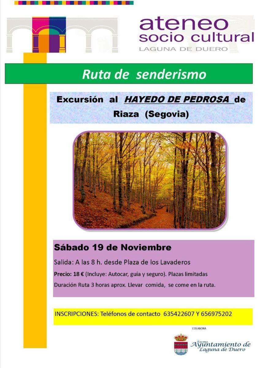 Excursión al hayedo de Pedrosa de Riaza (Segovia)
