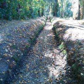 La acequia de Laguna de Duero: naturaleza y ocio unidos(II)